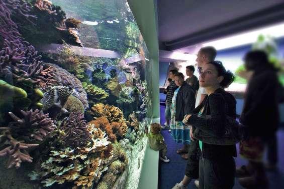 Un trimestre pour défier les géants des mers à l'Aquarium