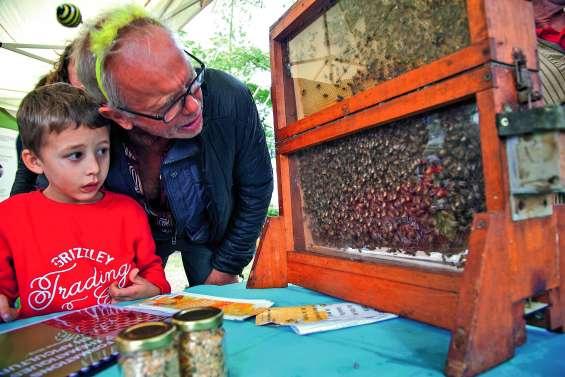 Les abeilles, stars du Parc forestier pour quelques heures