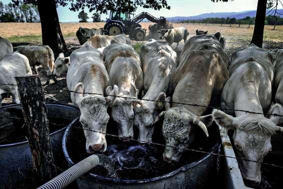 Le dispositif de calamité agricole déclenché