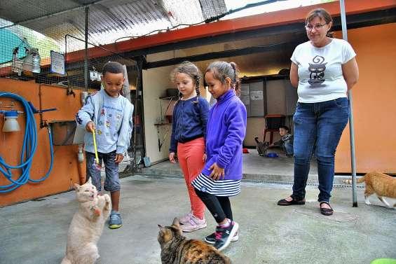 Quinze enfants reçus en visite au refuge de la Spanc, à Koutio