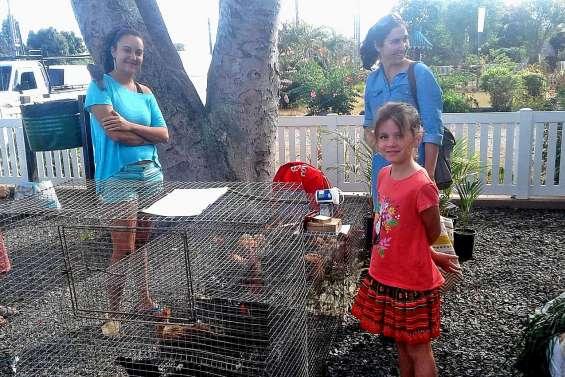 Les visiteurs sont venus picorer au marché spécial poulet
