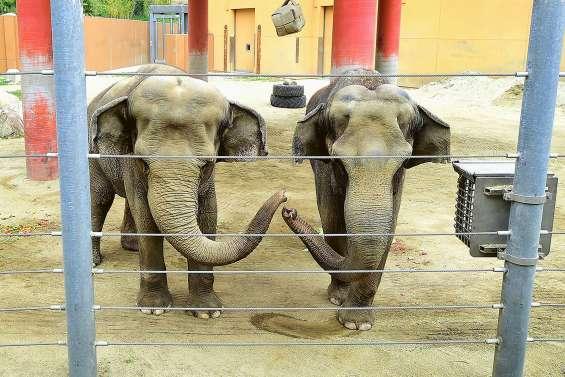 La vente d'éléphants sauvages d'Afrique à des zoos pratiquement interdite