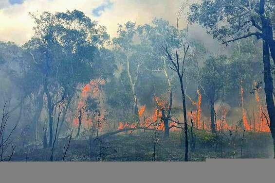 Des flammes dépassant dix mètres ravagent la zone de Montfaoué