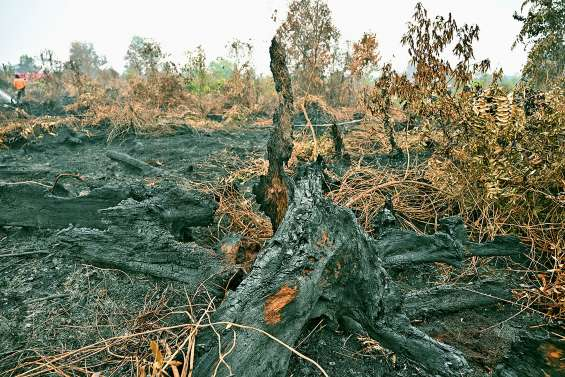 Des feux de forêt géants à Bornéo et à Sumatra
