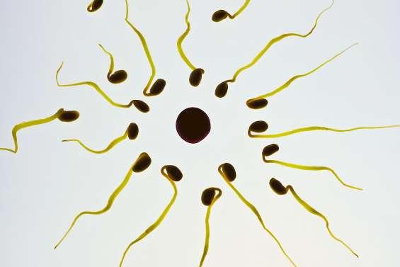 Des congés pour procréation médicalement assistée