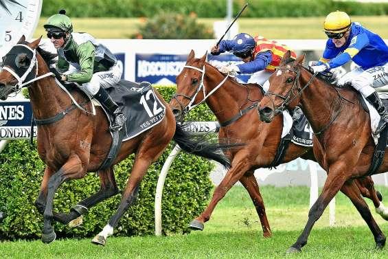 On achève mal les chevaux de course : le reportage qui choque l'Australie