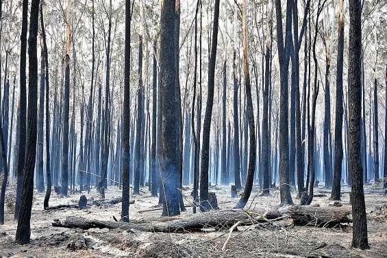 Incendies : Sydney se prépare à affronter une situation « catastrophique »