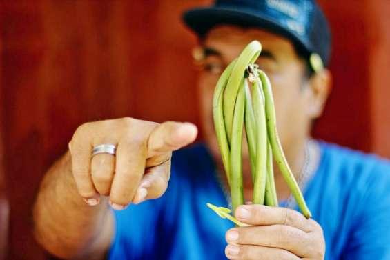 A plus de 50 000 francs le kilo,la vanille de Tahiti se fait rare