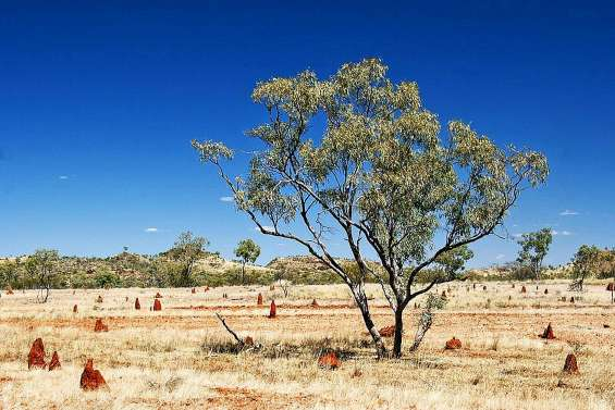 Deux touristes secourus deux semaines après  une panne dans l'Outback