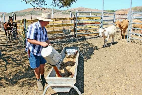 Agriculteurs et éleveurs face aux défis de la sécheresse