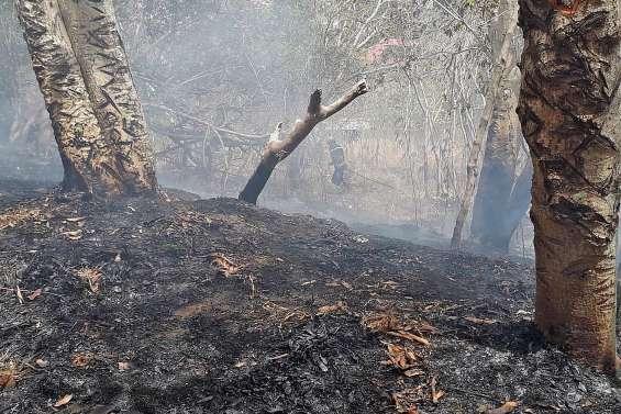 Une incendiaire interpellée après le feu de Montravel