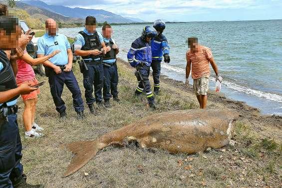Un appel à témoins sur la présence de requins