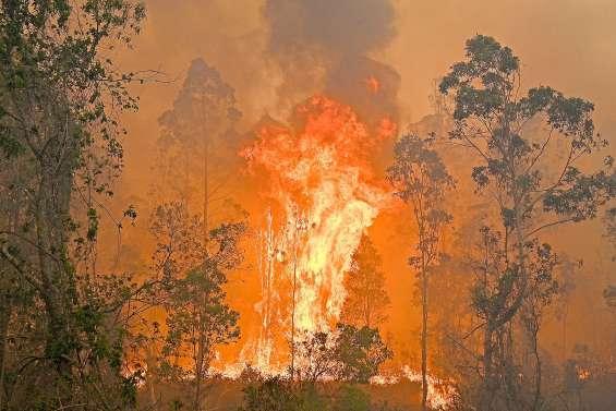 Les feux alimentent la montée du CO2 dans l'atmosphère