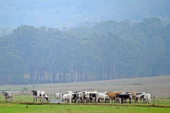 La pluie devrait mettre  un terme aux feux de forêt