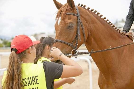 Une journée pour découvrir l'équitation