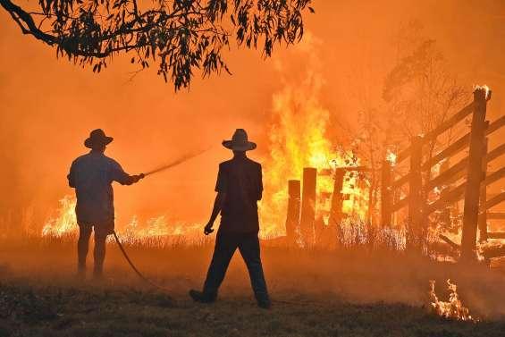 Les incendies ont détruit 20 % des forêts