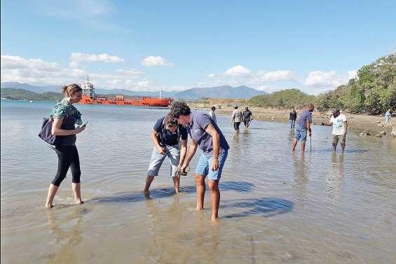 La mangrove reprend vie dans la baie du Sénat coutumier