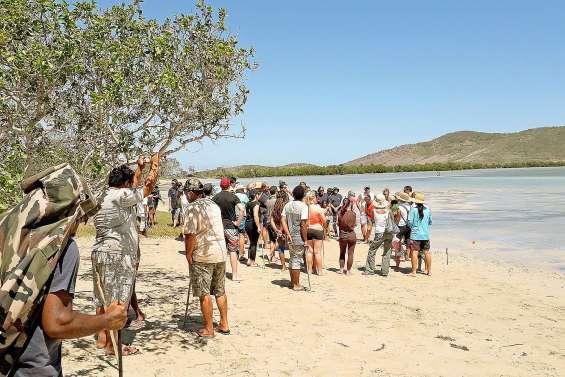Mille nouveaux palétuviers plantés dans la mangrove de Ouano