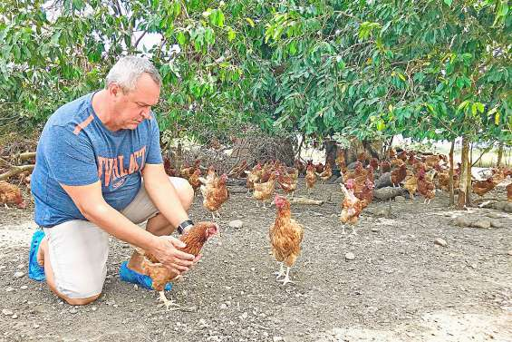Les Calédoniens se ruent sur les œufs