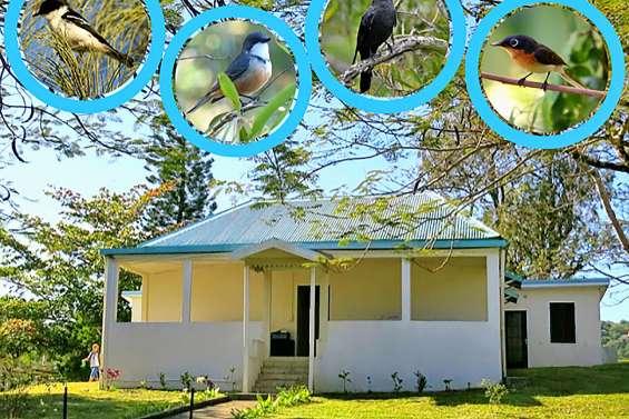 Les oiseaux vont chanter ce week-end à la Villa-musée