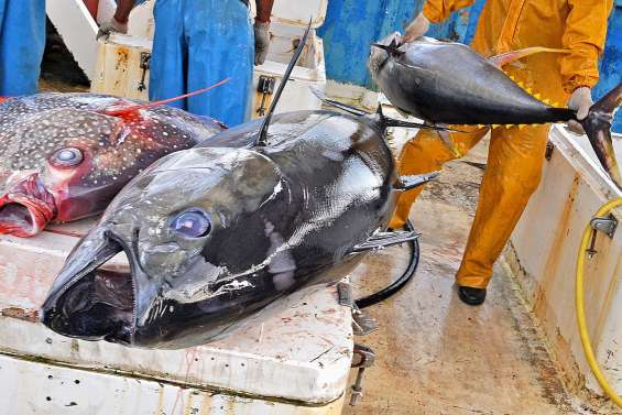 Mercure dans le poisson pélagique :  l'Anses signe un rapport inquiétant