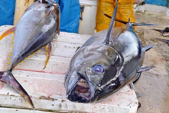 Mercure : pourquoi faut-il modérer sa consommation de poisson ?
