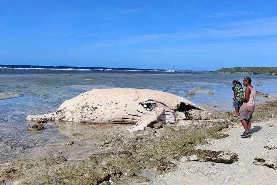 Une baleine s'échoue à Ouvéa