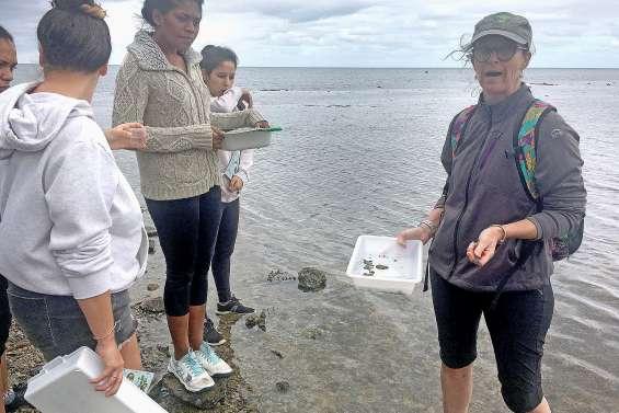 Découvrir la nature, de la mangrove aux étoiles de mer