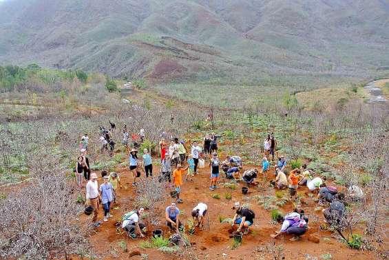 Avec 30 000 arbres plantés, une saison de reboisement record pour Caledoclean