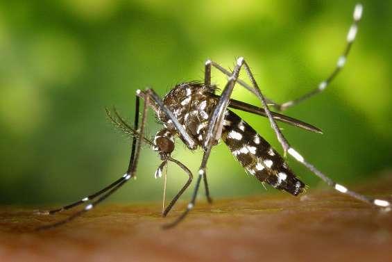 Le moustique tigre menace toute la Métropole
