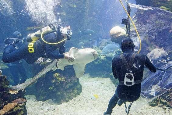 [VIDÉO]L'Aquarium des lagons se vide de ses occupants