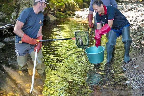 Avec la sécheresse, le déménagement forcé de poissons de rivière