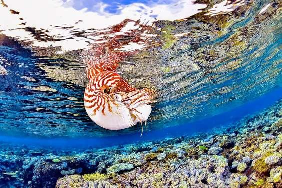 Les joyaux du Festival de l'image sous-marine