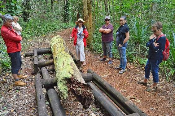 À la découverte de Prony, entre bagne, mine et exploitation forestière