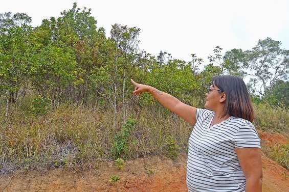 Deux hectares de bois de santal pour assurer leur retraite