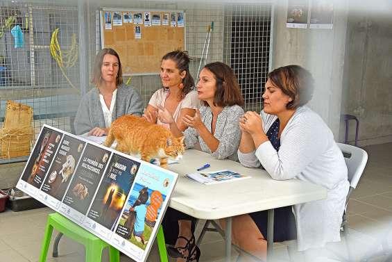 Le bien-être animal bientôt encadré par une loi du pays