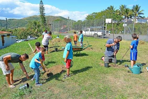 Des arbres de forêt sèche plantés à l'école Louise-Michel