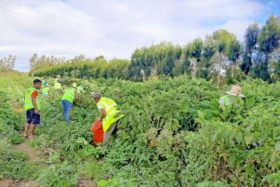 1,6 tonne d'aubergines mise  à disposition d'associations