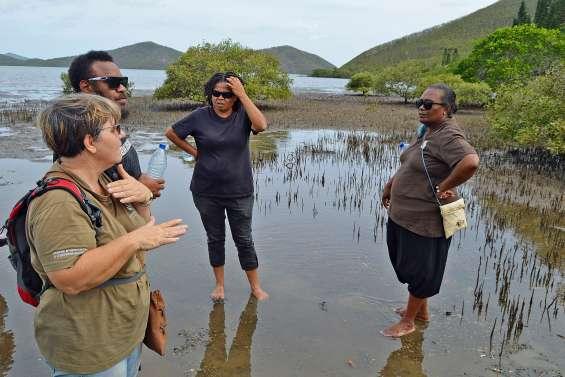 Pour sauver la mangrove, « il faut comprendre son fonctionnement »