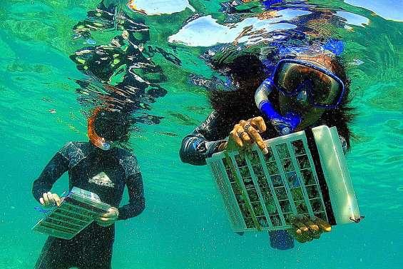 « Mettre le nez sous l'eau permet de mieux sensibiliser à la protection du corail »