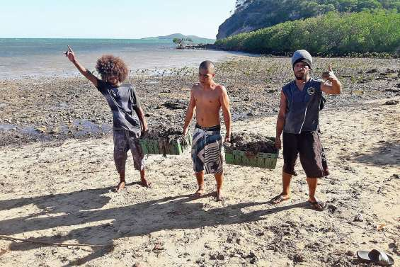 De nombreuses algues vertes ont envahi la mangrove de la plage de Tina