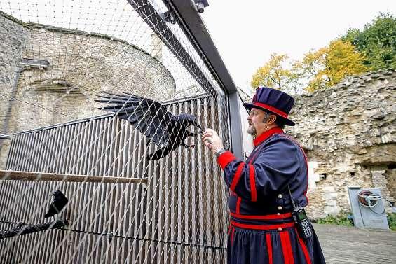 God save the birds : avec le « maître des corbeaux » de la Tour de Londres