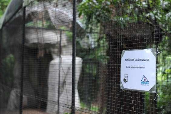 Le virus Nipah sur des roussettes du parc forestier