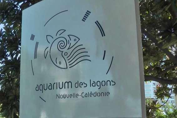 [AUDIO] Deux journées pour apprendre à protéger les océans