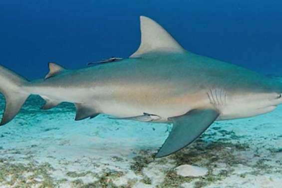Attaque de requin fatale