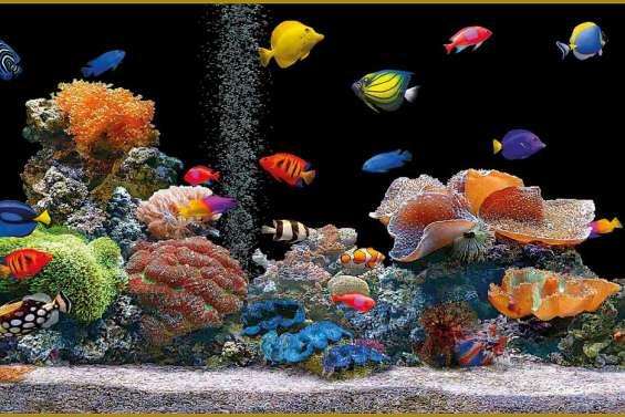 L'aquarium : un monde fragile