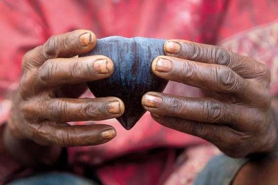 Sur les traces du kava