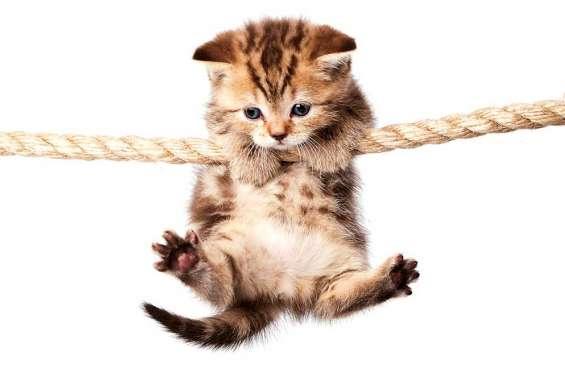 Des chatons, oui ou non ?