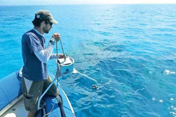 Dans l'œil sous-marin du Squale