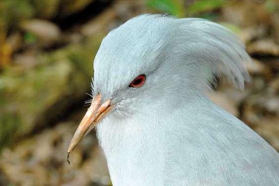 Les oiseaux du Caillou
